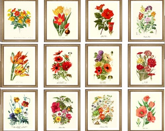 "Botanical Print Set. ANY 12 botanical prints. Floral Wall Art Set. Flower prints set.  5x7"" 8x10"", 11x14"""