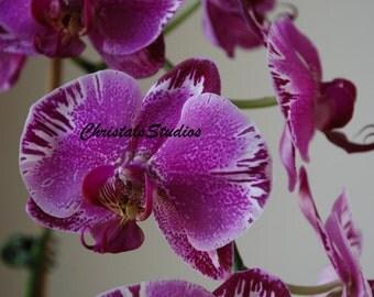 Phalaenopsis, Purple Orchid, Fine Art, Digital Photgraphy, Flower Photo, Nature Photography, Garden, Print