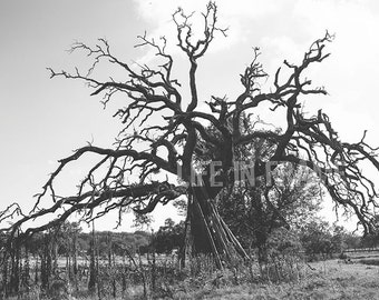 The old tree, Black and White Photography