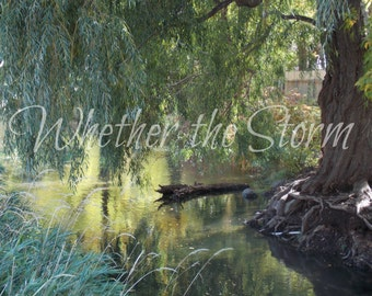 """Weeping Willow print """"Summer Afternoon"""" - Fine art print Home decor"""