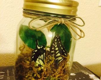 Butterfly Wing Terrarium