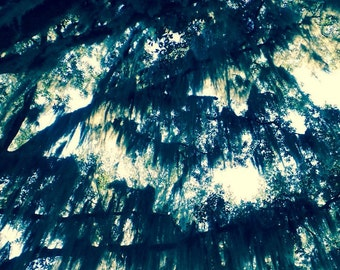 Still Life Photography**Tree Print**Nature Photography**Mossy Oak Tree Print**Sunlight Photography