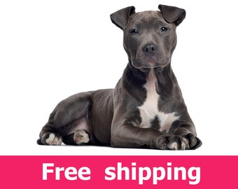 American Staffordshire terrier dog wall sticker, dog wall decal removable vinyl animal mural pet wall sticker paw dogs wall decor [img090]