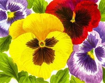Colorful Pansies - Nature Flowers Watercolor Painting Reproduction Fine Art Print or Wrapped Canvas for Home Decor.