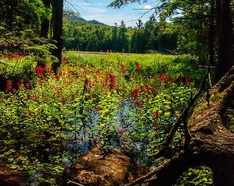 Adirondack Landscape Photograph, Adirondack Photography, Nature Photograph, Flower Print, Adirondack Fine Art, Adirondack Decor