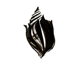 Modern Home Decor Seashell Print Black and White Minimalist Shell Artwork Knobbed Whelk