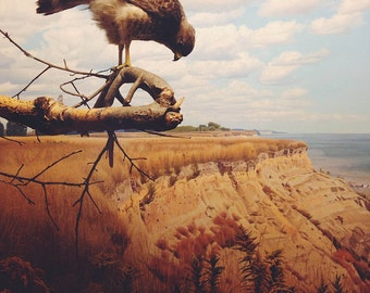 Bird Photography, Animal Photography, Rocks, Boys Room, Landscape Photo, Wall Decor, Vintage Colours, White, Brown, Gold - Bird