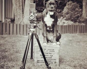 "Dog Photographer Photo ""Pipographer"" - 8x8 Square Black and White Photography Print - Funny Dog Art"