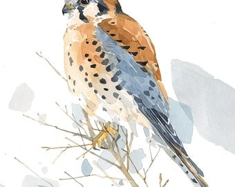American Kestrel Watercolor Painting, 8x10 Print