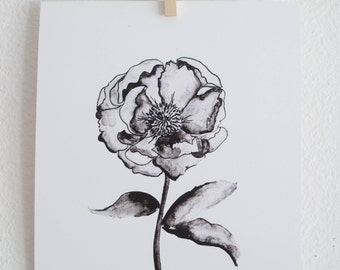 SALE - Greyscale Peony Blossom - Watercolor Floral Print  - 8 x 10