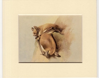 1960 mini snuggling bat original vintage lithograph print - matted crop from a larger print