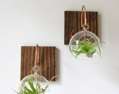 Set of Two Wood and Copper Wall Mounts with Glass Orb and Plant // Unique Wall Decor // Handmade Wall Hook, home decor, aerium, air plants
