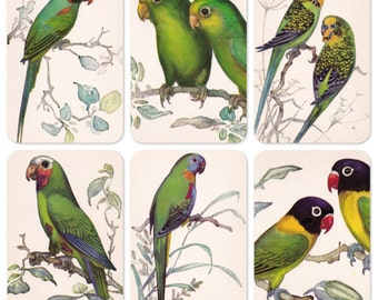 Parrots, Drawings by N. Albova. Set of 10 Vintage Prints, Postcards - 1981. Fine Arts Publ., Moscow