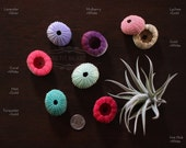 3 OMBRE Replacement Sea Urchin Shells // Jellyfish Air Plant gradient color fade gold turquoise mint coral