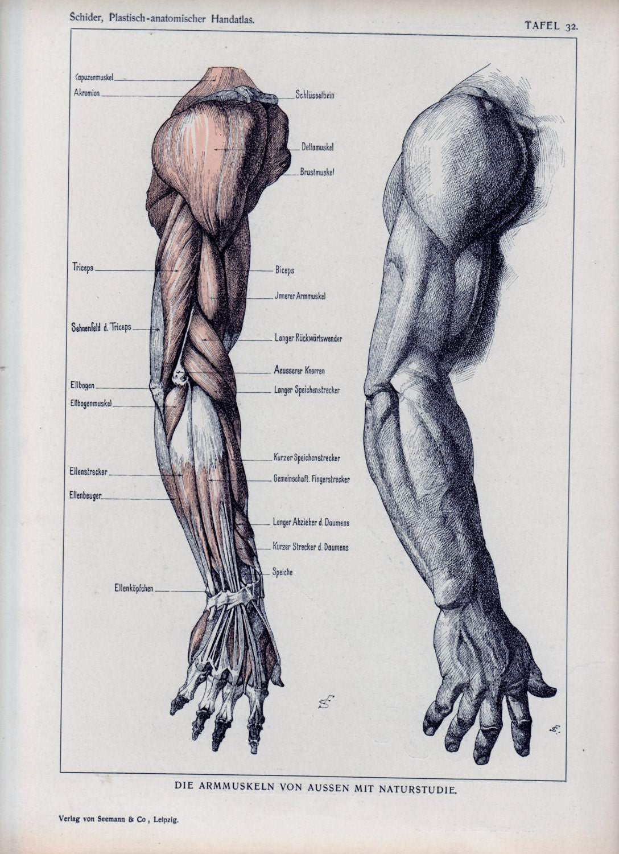 Anatomie clothing sale