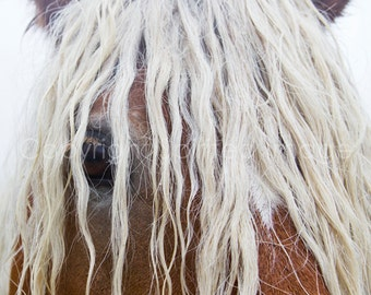 BLONDE - Comtois Horse. Equine Photography.  Fine Art Print - Wall Decor, Nature photography, Rustic, Horse Art