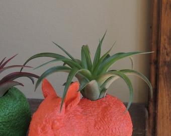 Poppy Orange Rabbit Planter / Animal Planter / Animal Planters / Air Plant Container