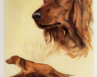 Vintage IRISH SETTER Dog Print  Illustration Cottage Home Decor Dog Gallery Wall Art Gift For Dog Lovers Men Women Him Her Birthday 2653