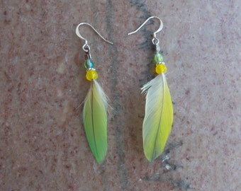 Conure Feather Earrings