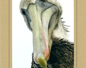"""Speciality Note Cards - Pelican """"Here's Looking at You"""" - Fine Art Pelican Photography - Set of 5 -  Brown Border Card - 5x7 - Blank Inside"""