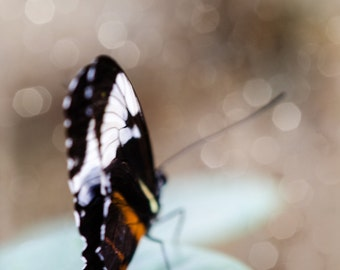 Dreamy Butterfly with Bokeh. Insect. Nature Photography. Print by OneFrameStories.
