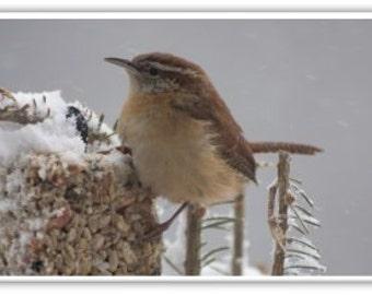 Iphone Case , Fine Art Photography, iPhone 4/4s, iPhone 5/5s, iPhone 6 Birds of New England Carolina Wren
