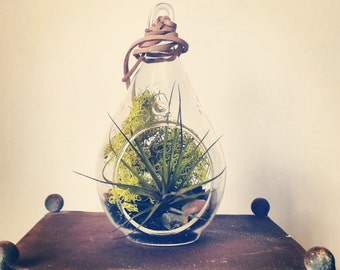 Air Plant Terrarium // Black Sand + Bright Green Moss