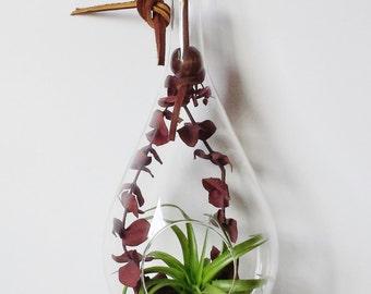Terrarium // Indoor Planter
