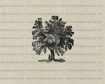 Mango Tree Vector Instant Download Clip Art, Exotic Fruit Tree Graphic Clipart Vintage Nature Botanical Illustration jpg png eps WEB1755BD