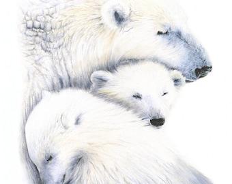 art prints - bear art - bear illustration - bear - polar bear - nursery art prints - wall decor