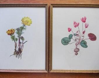 Framed Botanical Prints in Gold Wood Frames. Natural History Flower Specimen Pair, Antique Nature Art, Lithograph. Moritz Michael Daffinger.
