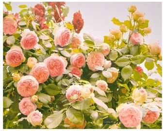 Roses photography, pastel pink wall art, romantic floral art print, large wall art, garden flowers, living room decor, 11x14, 16x20, 24x30