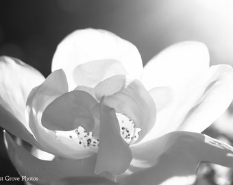 Flower Photography, Photography Prints, Black and White Petals, Wall Art, Decor
