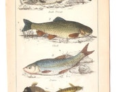 Antique Fish book page