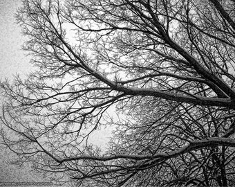 Fine Art Photography Winter Tree, Tree Photograph, Black And White Photo, Bare Tree Branches, Home Office Decor, Kitchen Wall, Mudroom Art