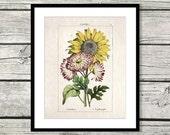 sunflower decor sunflower art sunflower gift botanical print sunflower kitchen decor sunflower print sunflower wall decor sunflower wall art