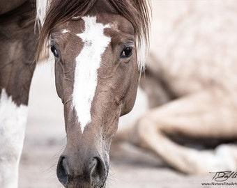 Horse Photo - Photo of Horse: Peek-a-Boo Horse Photo