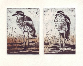 Original Etching of two Bush_stone curlews