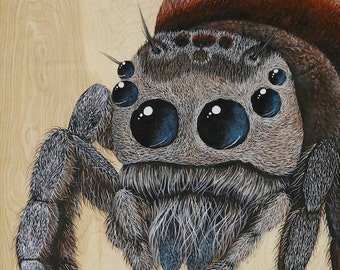 Jumping spider art print / spider artwork by Skee Goedhart / insect limited edition giclee / kid's room art / hairy bug with big eyes