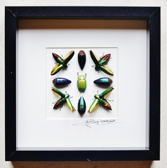 Artframe with real insects : Topquality display with beautiful mosaic chrysochroa beetles  FREE SHIPPING