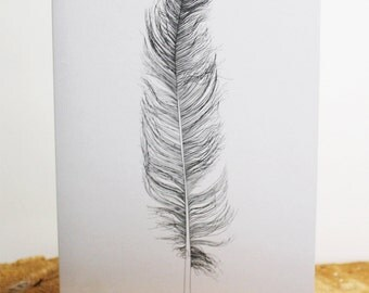 Feather illustration greeting cards for any occasion
