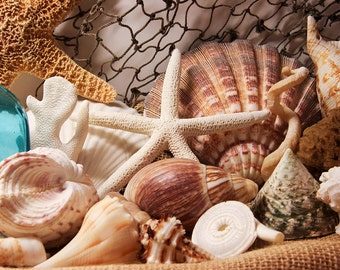 Sea Shells Print - Beach Wall Photo, Nautical Decor, Beach House Decor, Beach Colors