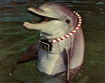 dolphin /// Mid Century 1950's Vintage Postcard