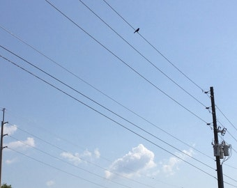 "Bird Photo, Telephone Wires, Bird Photography, ""The Bird Wire"""