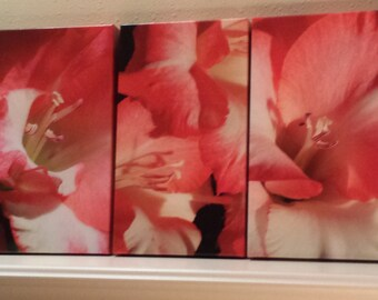 Gladiolus Pink Lady Fine Art Photography Triptych on Canvas