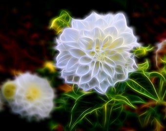Flower fine art Photography - White Flowers,  photography print