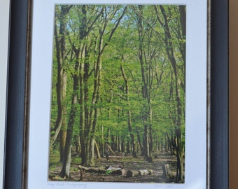 Fine Art Photographic Print in Signed Mount - 'Forest View' (frame not included)