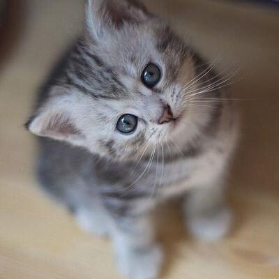 Kittycatshop