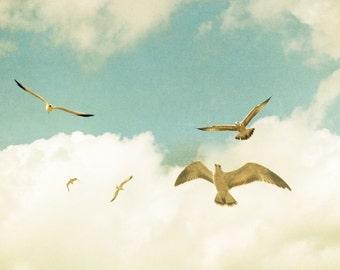 Ocean photography, seagulls, soaring birds, summer vacation, seaside, bird print, bird art, nautical decor, east coast, Atlantic coast