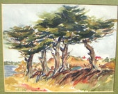 Goldsworthy Monterey Pines California